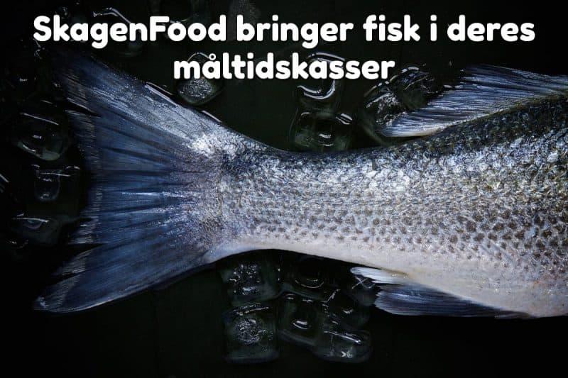 SkagenFood bringer fisk i deres måltidskasser